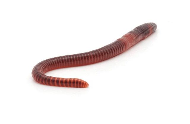 retadup cryptomining worm takedown