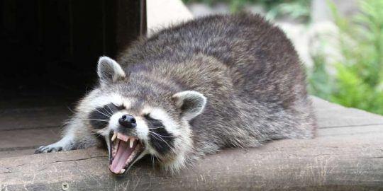 raccoon malware email gateway