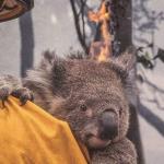 Card Skimmer Hits Australian Bushfire Donation Site
