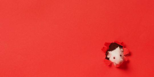 crimson RAT