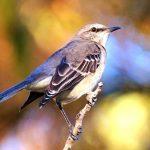 Blue Mockingbird Monero-Mining Campaign Exploits Web Apps