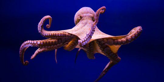 octopus scanner github malware