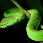 Snake Ransomware Delivers Double-Strike on Honda, Energy Co.