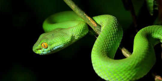 honda snake ransomware attack
