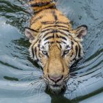 Intel Adds Anti-Malware Protection in Tiger Lake CPUs
