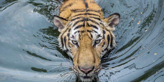 intel tiger lake cpu protection