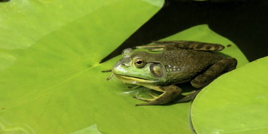 fritzfrog p2p botnet