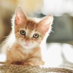 Charming Kitten Returns with WhatsApp, LinkedIn Effort