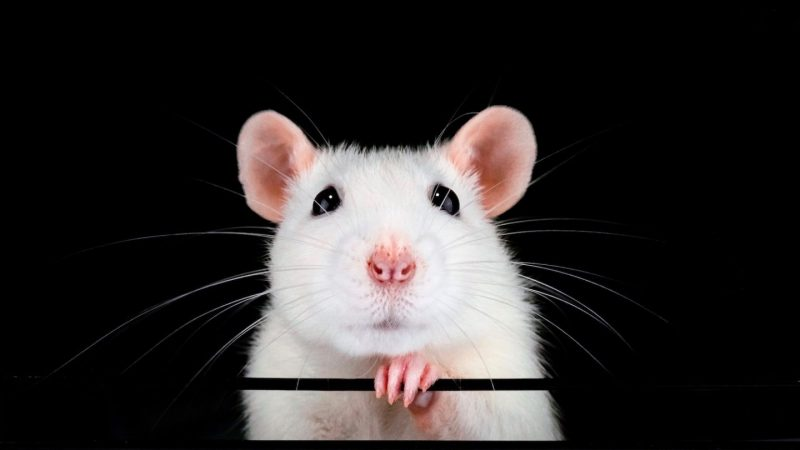 nanocore rat email