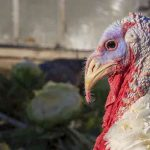 TurkeyBombing Puts New Twist on Zoom Abuse