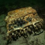 Divers Pull Rare Surviving WWII Enigma Cipher Machine from Bottom of the Baltic
