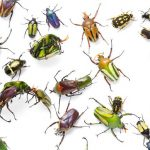 4 Innovative Ways Cyberattackers Hunt for Security Bugs