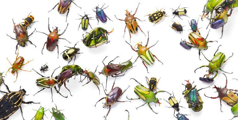 Bug Bug (river)