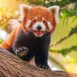 Firefox Patches Critical Mystery Bug, Also Impacting Google Chrome