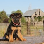 Holiday Puppy Swindle Has Consumers Howling