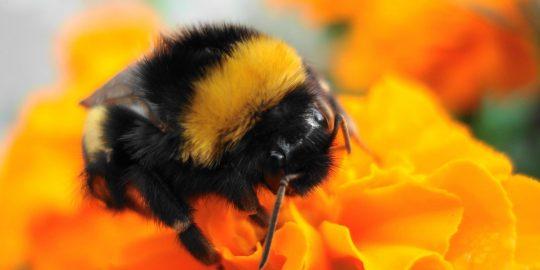 bumblebee xhunt web shell