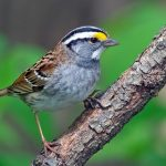 Mysterious Silver Sparrow Malware Found Nesting on 30K Macs