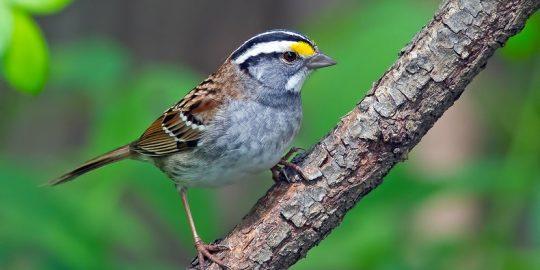 sparrow malware