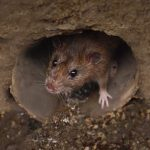 Spy Operations Target Vietnam with Sophisticated RAT