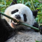 New Crypto-Stealer 'Panda' Spread via Discord