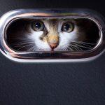 'Charming Kitten' APT Siphons Intel From Mid-East Scholars